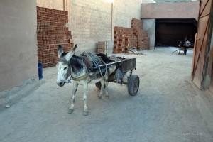 Marokko_236_2013-11-02