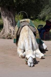 Marokko_296_2013-11-11
