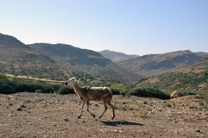 Marokko_762_2013-11-10