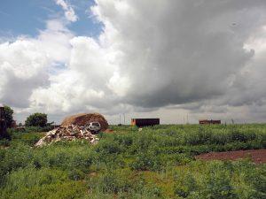 Der verwilderte Kartoffelgarten