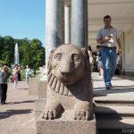 Putinlöwe in Peterhog